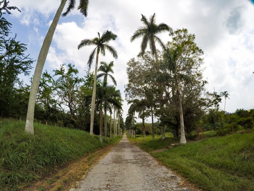 Drive into Botanical Gardens Cienfuegos Cuba