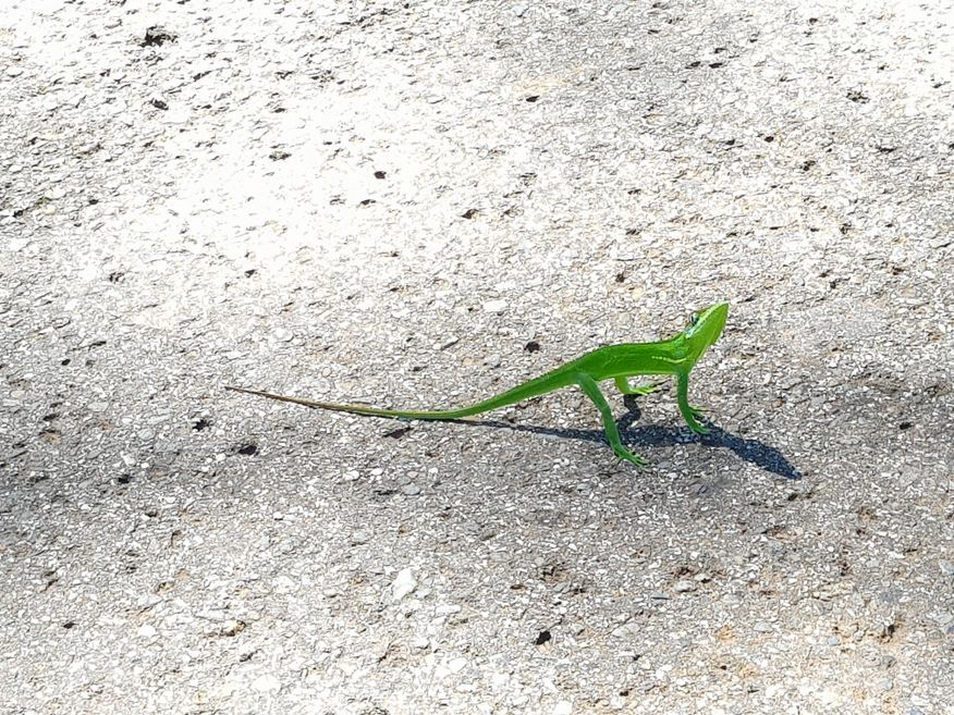 This little guy was trying to cross the road El Nicho Waterfalls Cienfuegos Cuba