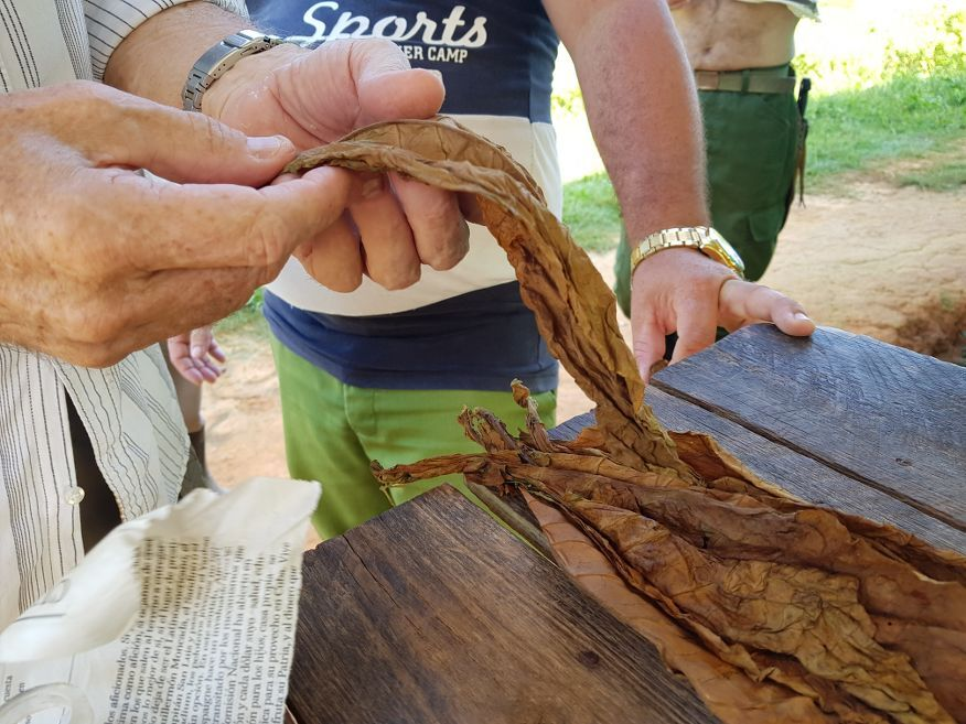 Checking out the tobacco leaves horse ride tour from Vinales