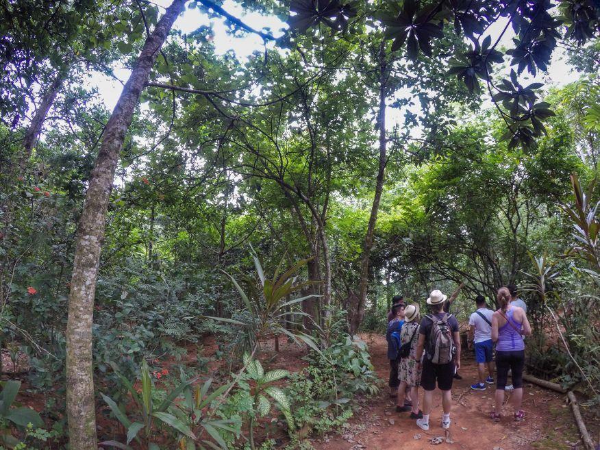 Tour of Botanical Gardens Vinales Cuba