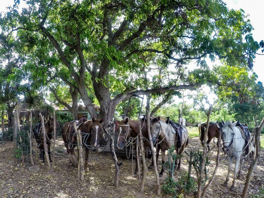 Horse car park Horse Ride Tour to Waterfalls Trinidad Cuba