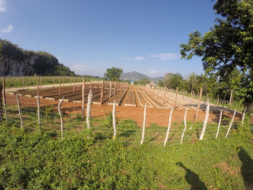 Passing a veg farm horse ride tour from Vinales Cuba