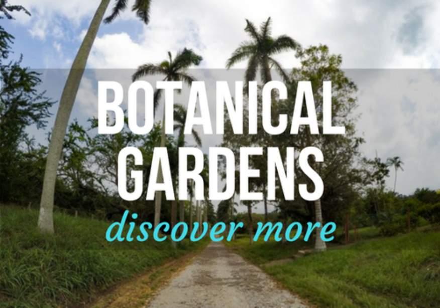 Botanical Gardens in Cienfuegos