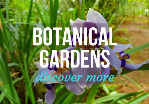 Botanical Gardens in Vinales