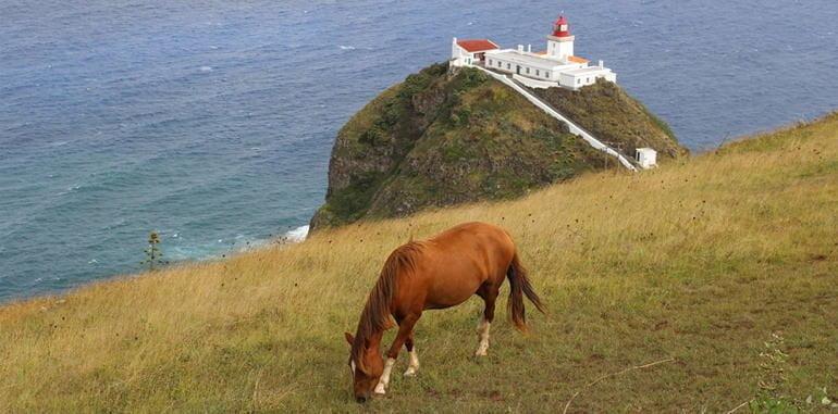 azores-santa-maria-faral-da-lighthouse-horse-field
