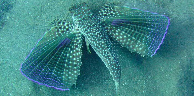 Ibiza Aquariums