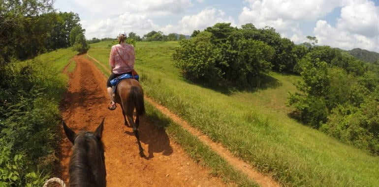 Plantation Horse Riding Tour