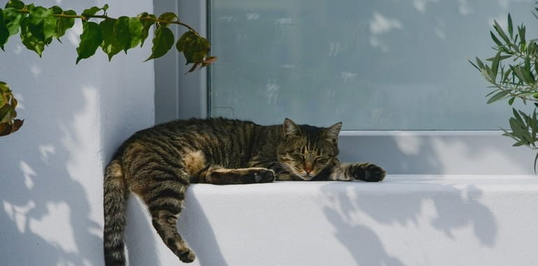 greek-islands-cyclades-cat-windowsill