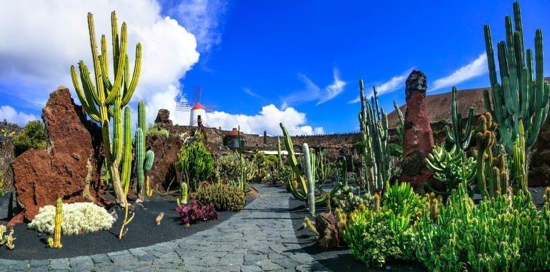 jardin-de-cactus-garden-guazita-panoramic-view-cacti-cobblestone-path-windmill-blue-sky