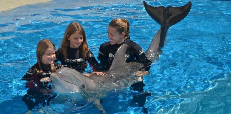 mexico-isla-mujeres-activity-dolphin-discovery