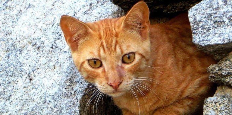 mykonos-attraction-mykonos-town-alley-cats
